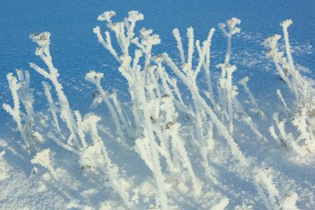 icily: Frozen grass. Stock Photo