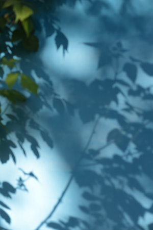 nuance: The shadow of the leaves on the blue wall.Abstract background.