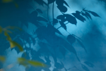 disorderly: The shadow of the leaves on the blue wall.Abstract background.