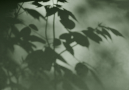 nuance: The shadow of the leaves on the wall.Abstract background.