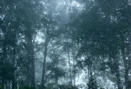 deceptive: Forest.Morning fog.Tinted image.