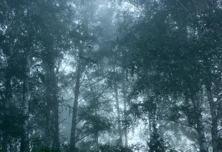 illusory: Forest.Morning fog.Tinted image.