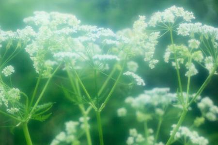 sappy: Green grass.Diffuse image.