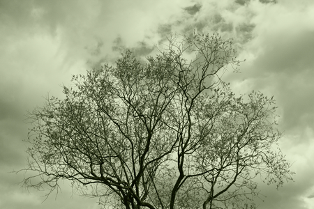 sullenly: Top tree.Tinted image.