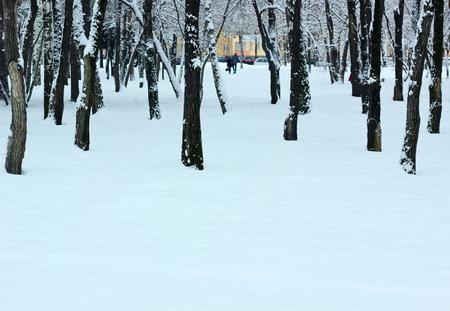 icily: Winter.City park.