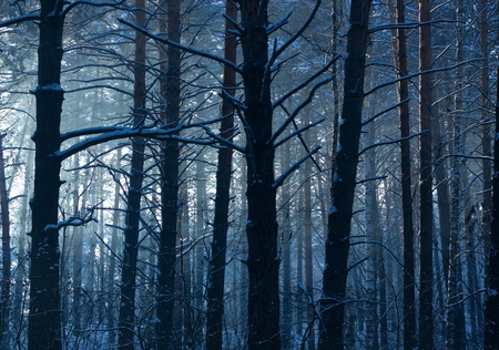 coldly: Winter. Early morning in a pine forest.