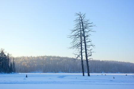 icily: Winter morning.Forest landscape with dry trees. Stock Photo