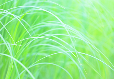 sumptuous: Green grass.Background.Shallow depth of field.