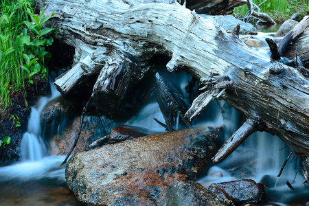 A fragment of forest stream.