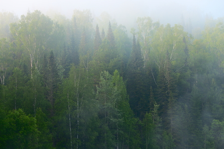 Bos in de ochtend van de mist de vroege zomer