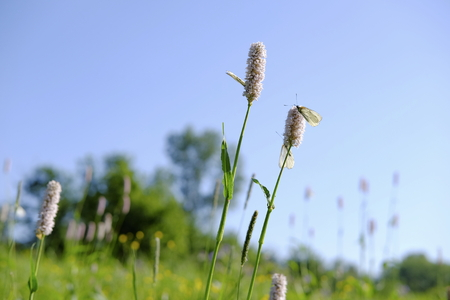 scorching: Summer meadow.Flowers and insects.Shallow depth of field. Stock Photo