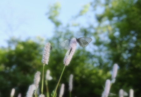 sultry: Flowers and butterflies against the background of foliage.The effect of a soft filter.