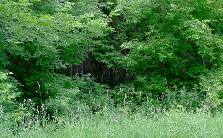 Forest thickets.Fragment.