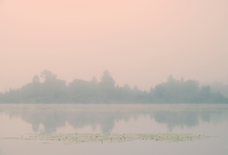 The far shore of the forest in the fog.Early morning.Tinted image.