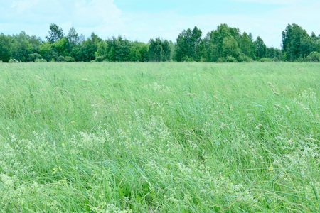 Summer green meadow.Tinted image. Stock Photo