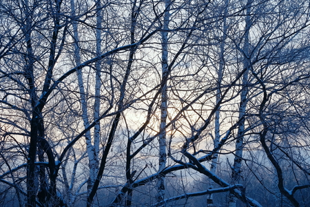 Morning in the winter forest. Stock Photo