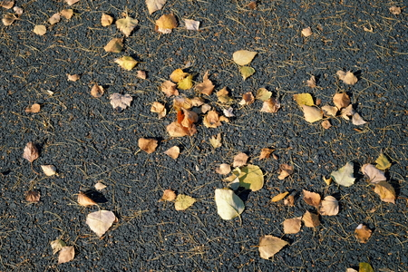 Autumn leaves on the asphalt.Background. Standard-Bild