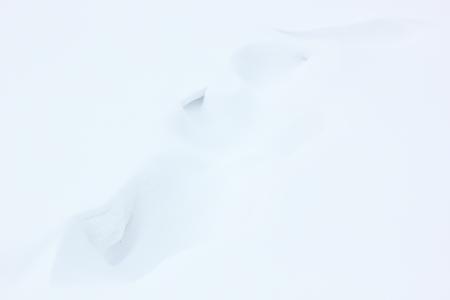 Snow background.