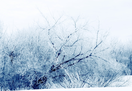 Trees covered with hoarfrost.Winter landscape.