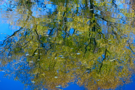 Reflections of trees in the water.