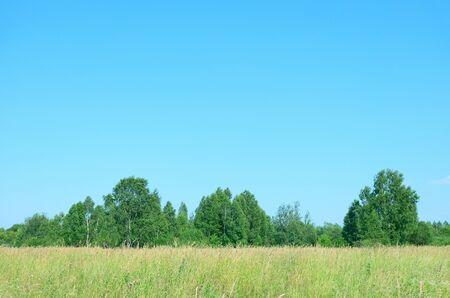 Summer meadow under a cloudless sky.