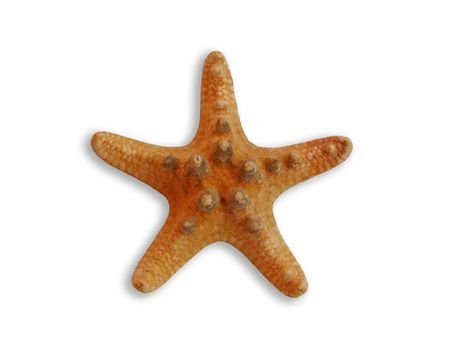 pardon:   Habitant of sea-bottom. A beautiful starfish is on a white background with shade.