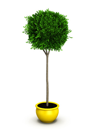 potting soil: Plant in yellow pot isolated on white background.3D illustration.