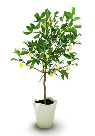 potting soil: lemon plant in white pot isolated on white background.3D illustration. Stock Photo