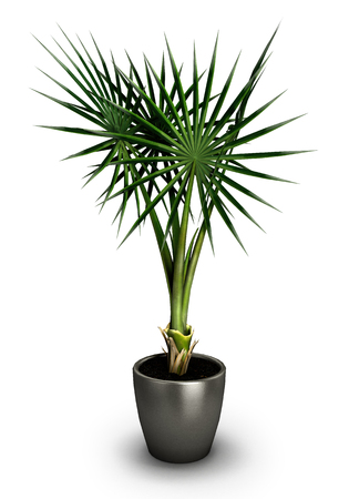 potting soil: Plant in black pot isolated on white background.3D illustration.