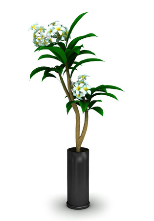 Plant in a black pot isolated on white background.3D illustration.