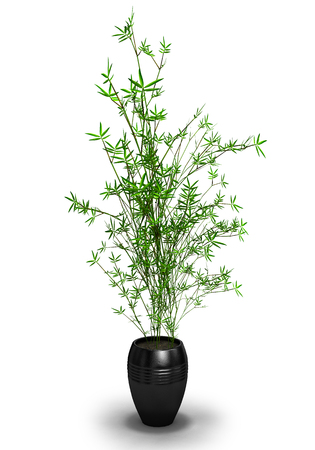 potting soil: green plant in a black pot isolated on white background.3D illustration.