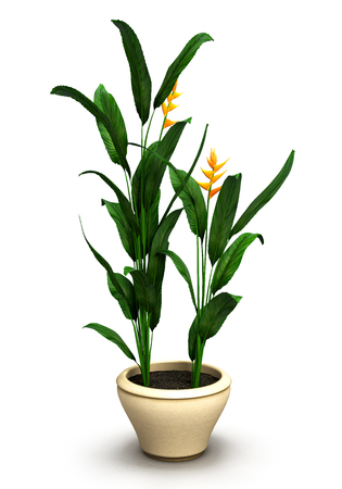 potting soil: Plant in a white pot isolated on white background.3D illustration. Stock Photo