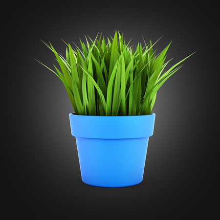 bakground: flowerpot with green grass on black gradient bakground 3d Stock Photo
