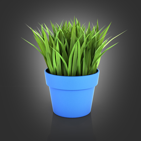 flowerpot with green grass on black gradient bakground with reflection 3d Stock Photo
