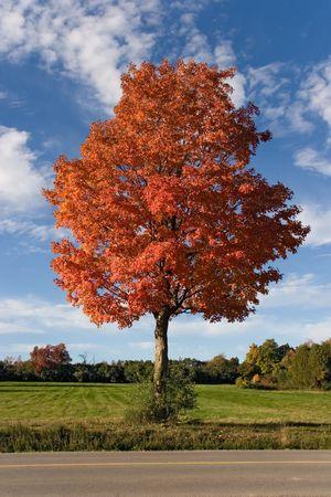01: nature autumn tree 01 toronto Stock Photo
