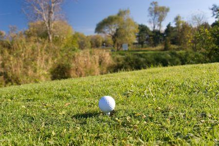 animal practice: Pelota de golf 04 withby