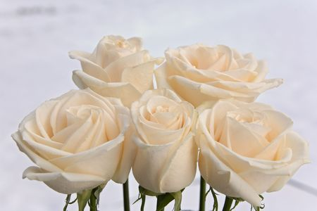 flowers rose 12. Stock Photo - 288745