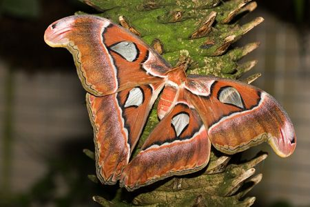 zweig: insect 001 butterfly.