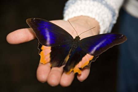 zweig: insect 015 butterfly hand. Stock Photo