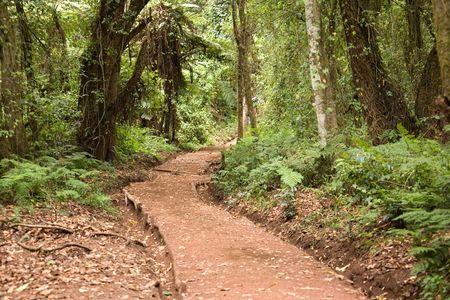 kilimanjaro: kilimanjaro 003 forest way to the summit