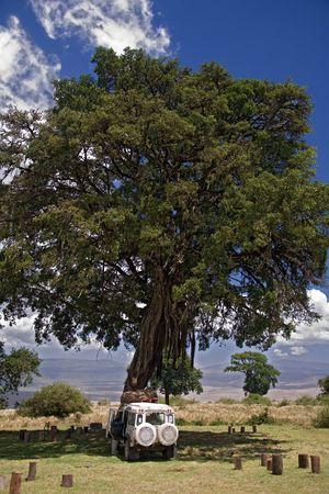 africa landscape 015 ngorongoro tree.