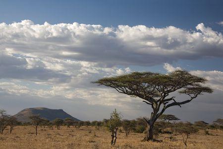 kenya: africa landscape 021 serengeti. tree Stock Photo