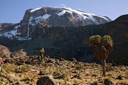 kilimanjaro: kilimanjaro 013 barranco hut camp. Stock Photo