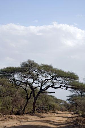 africa landscape 006. Manyara lake