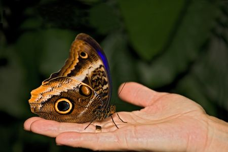 zweig: insect 016 butterfly hand.