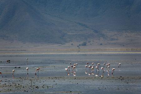 animals 068 flamingo. Banco de Imagens