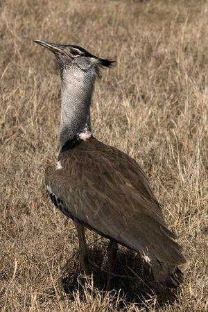 animals 082 bird.