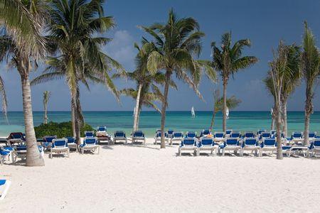 swimm: mexico beach palms ocean