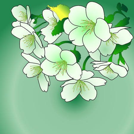Vector illustration of white and green flowers.