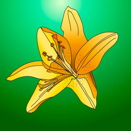 postcard background: Vector illustration og a brilliant yellow lilies. Illustration